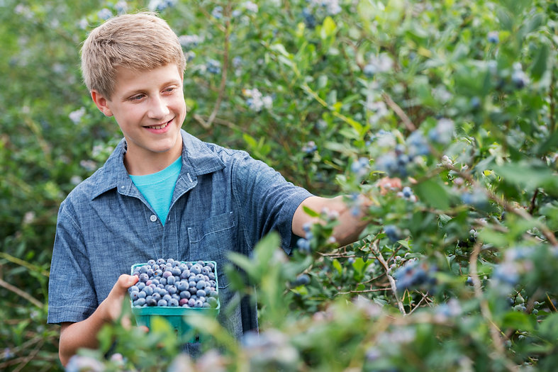 an-organic-fruit-farm-a-family-picking-t