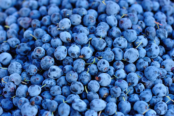 blue-berry-P6TBU5R.JPG
