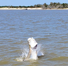 georgetown tarpon fishing