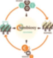 CAS_Diagrama_Símbiosy.jpg