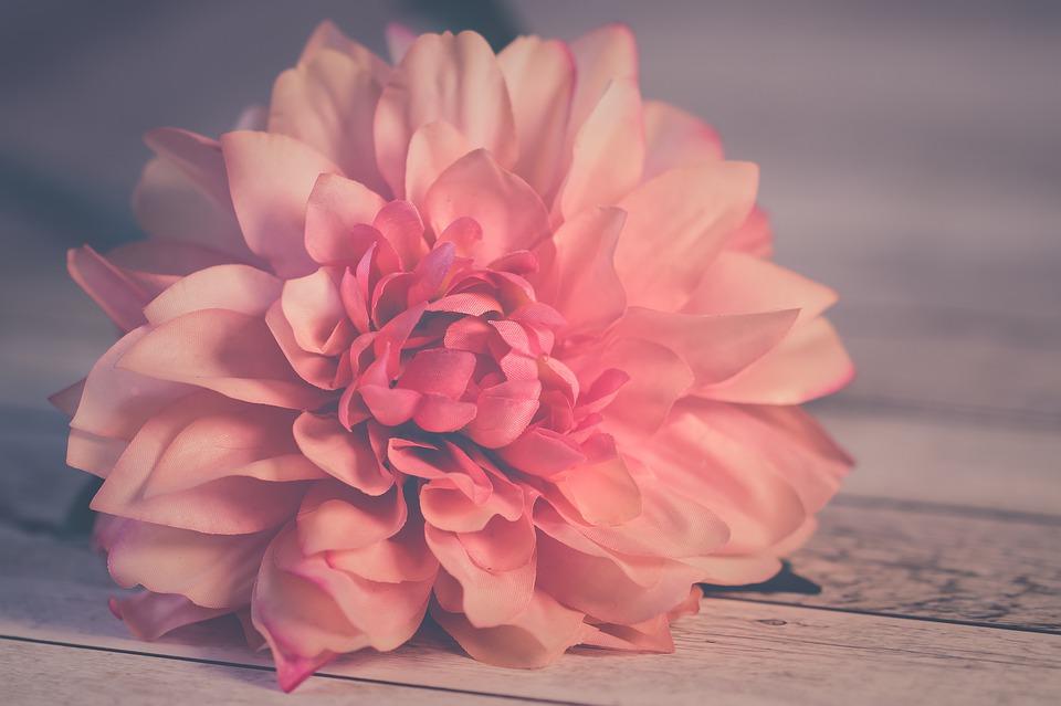 flower-3061523_960_720