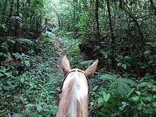 Horseback riding excursion Arenal Costa Rica