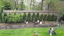 hedge-planting.jpg