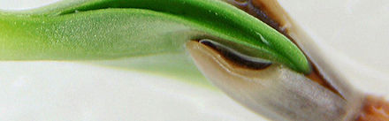sara-seed.jpg