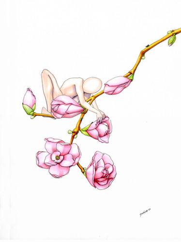 Magnolia BlossomSMALLs.jpg