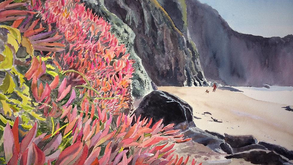 Ice Plant on Blind Beach - Penny Knapp