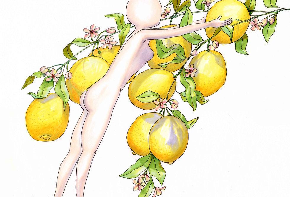 The Perfect Lemon