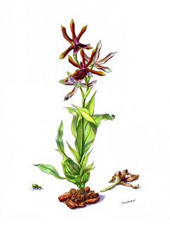My Orchids Work Week