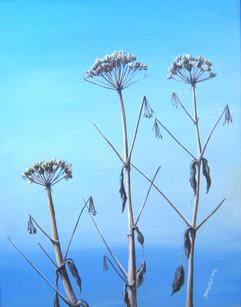 Dead Beachflowers