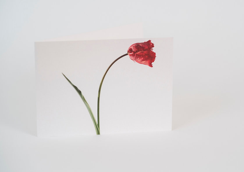 5 x 7 Wide Format Folded Card