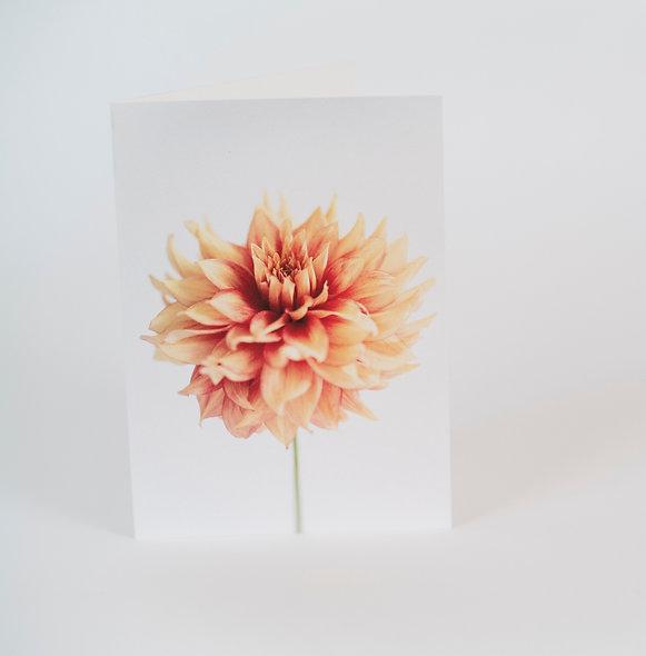 5 x 7 Folded Card