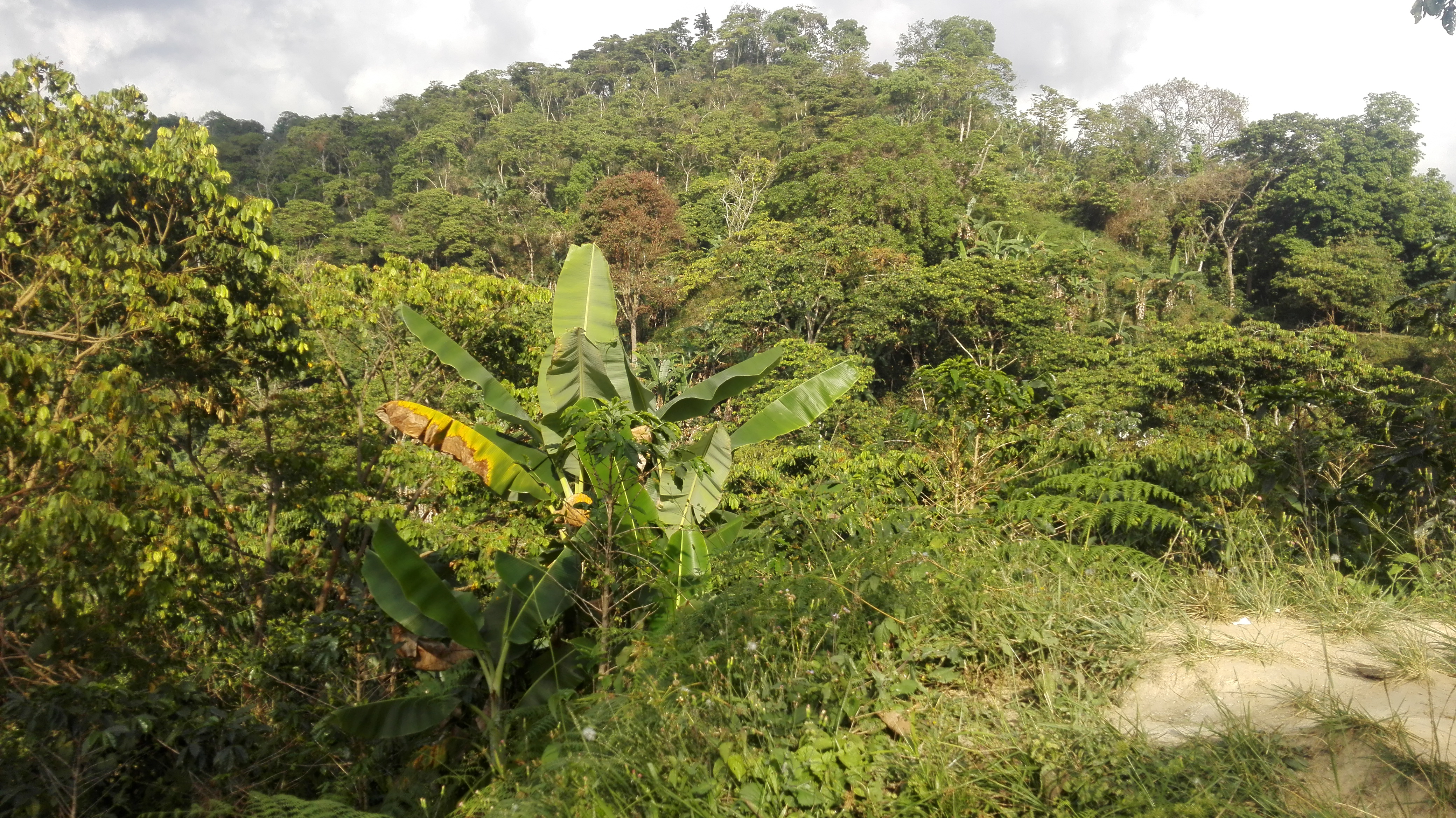 Flora alrededores