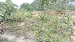 Flora del terreno