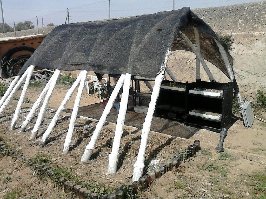 Invernadero de cañas