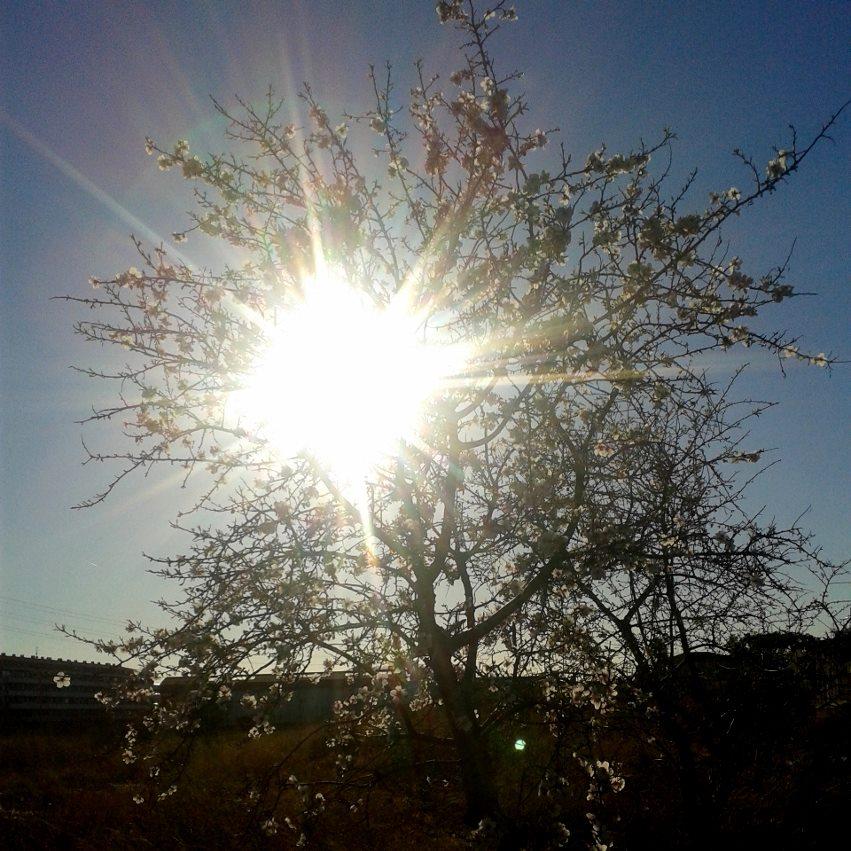 Fiesta del árbol2