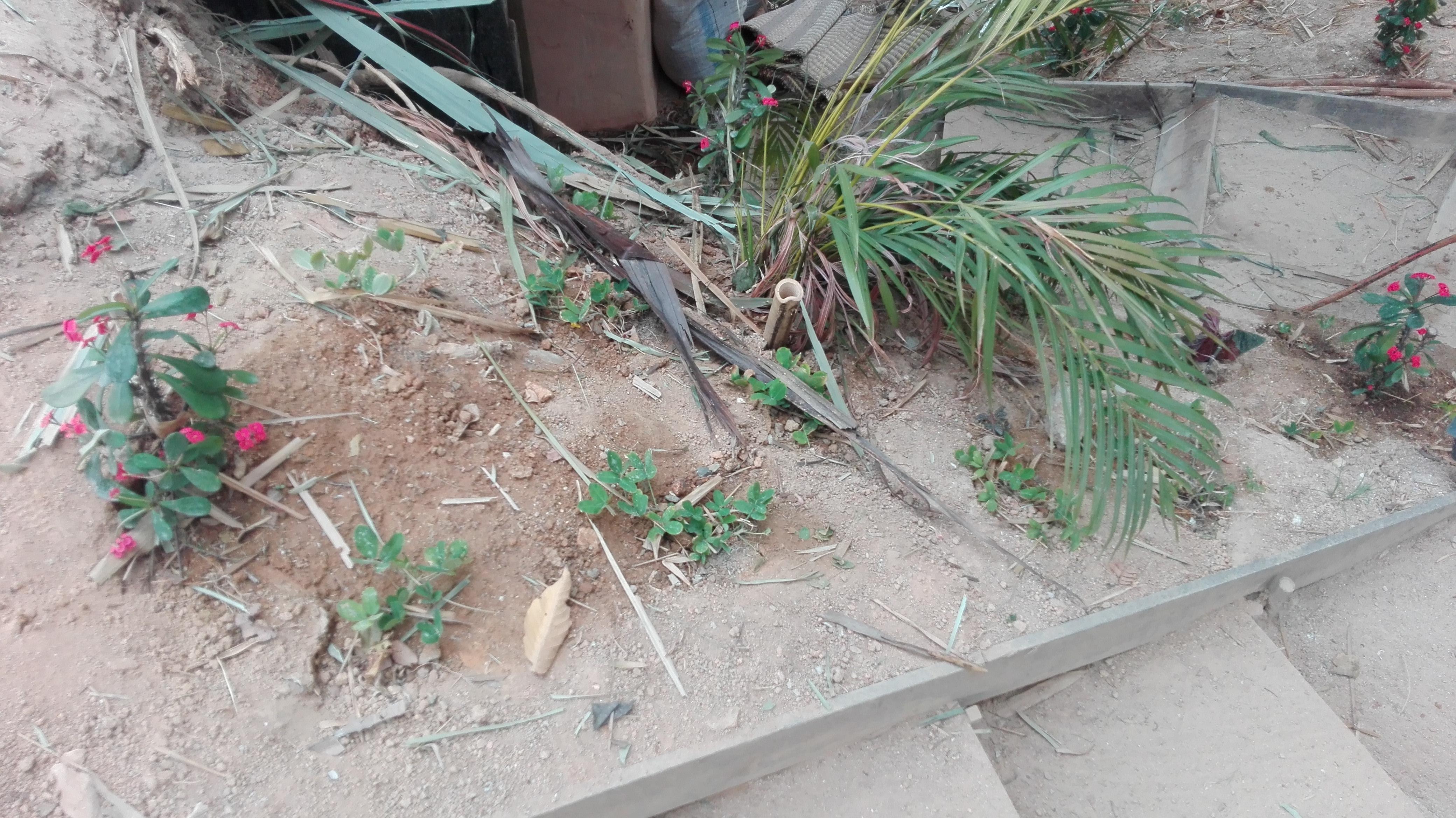 Ejemplo suelo arenoso
