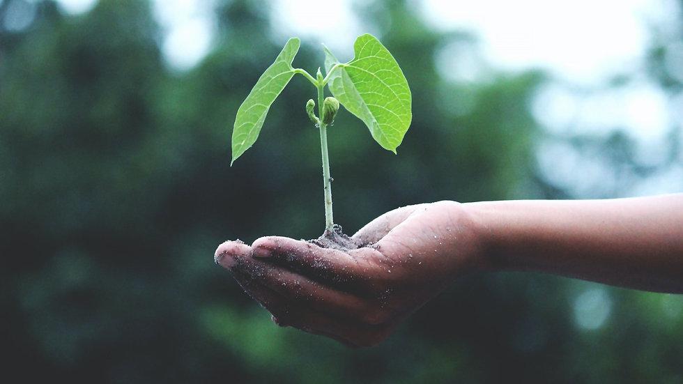 person-holding-a-green-plant-1072824_edi