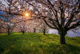 Grusskarte Frühling