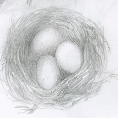 04. Small Nest Drawing