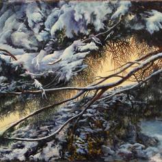 220b. Snow Crowned Pine