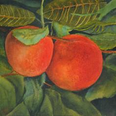 23. Peaches Leaves