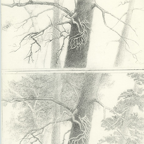 1. Pine Forest High Key