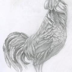 07. Rooster Sketch