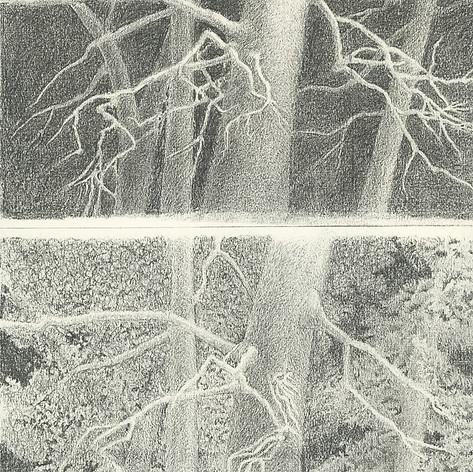 2.Pine Forest Low Key