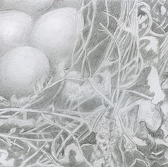 06. Golden Egg Drawing