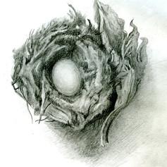 Lone Egg