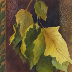 Leaf Medlay