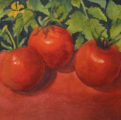 22 Tomatoes Leaves