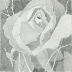 17d. Grey Rose