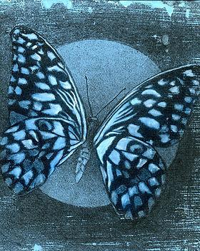 3Blue Butterfly 300.jpg