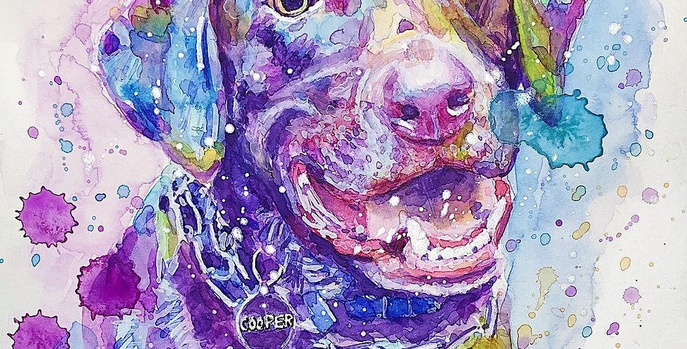 Labrador Dog - Portrait of Cooper