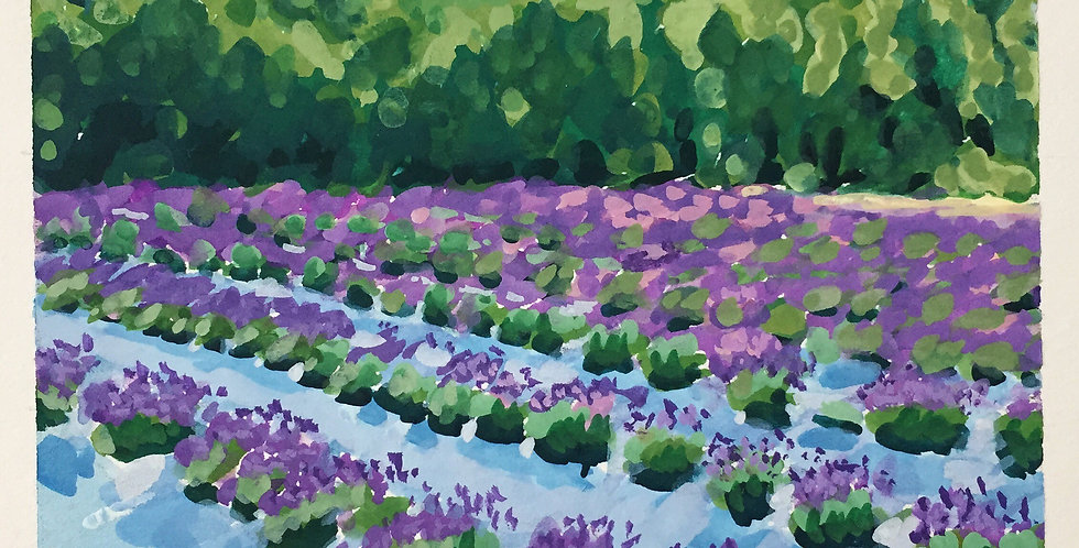 Lavender Farm New Brunswick (SOLD)