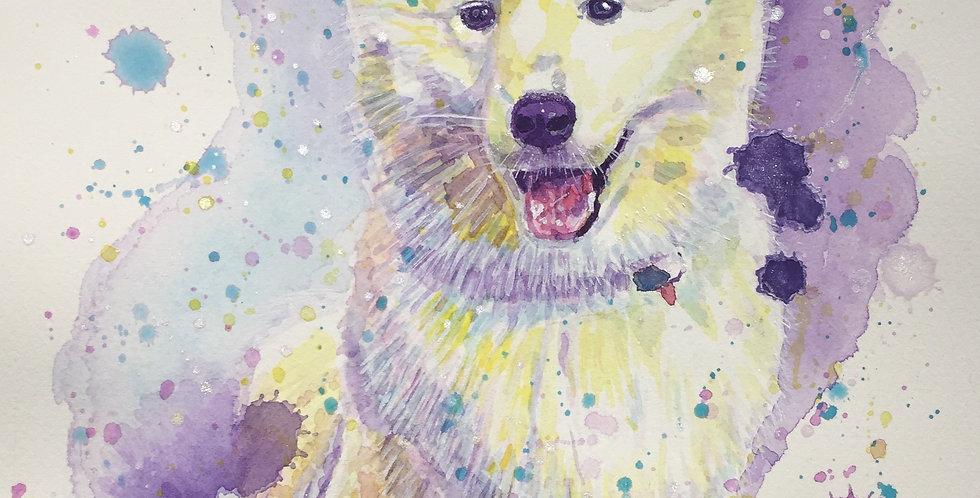 Samoyed Dog - Portrait of Juno