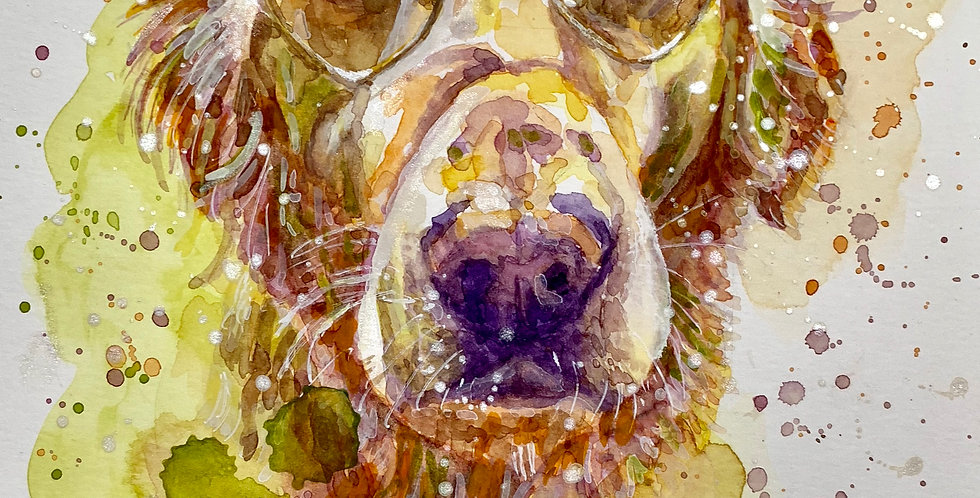 Golden Labrador - Portrait of Maynard