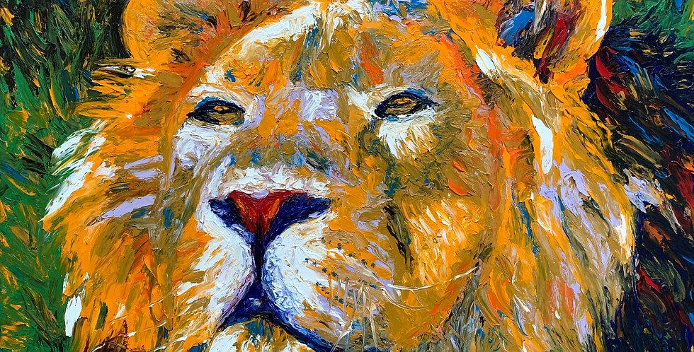 Lion Closeup (ON HOLD)