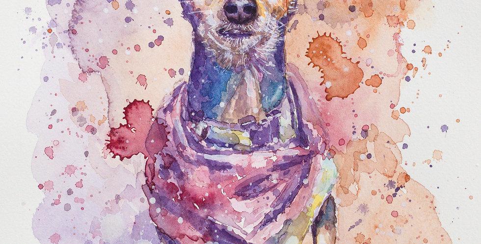 Chihuahua Dog - Portrait of Gigi