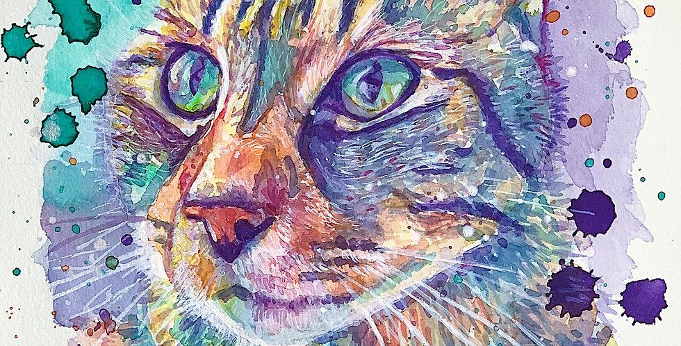 Cat - Portrait of Cinderelli