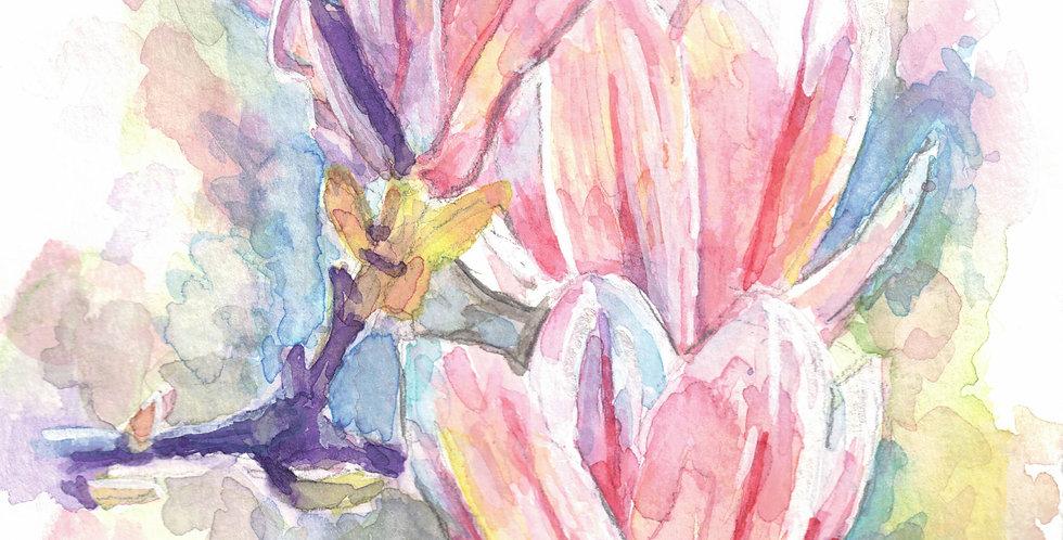 Magnolia - Study