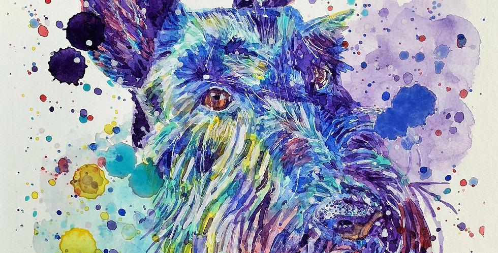 Scottish Terrier Dog - Portrait of Scotty