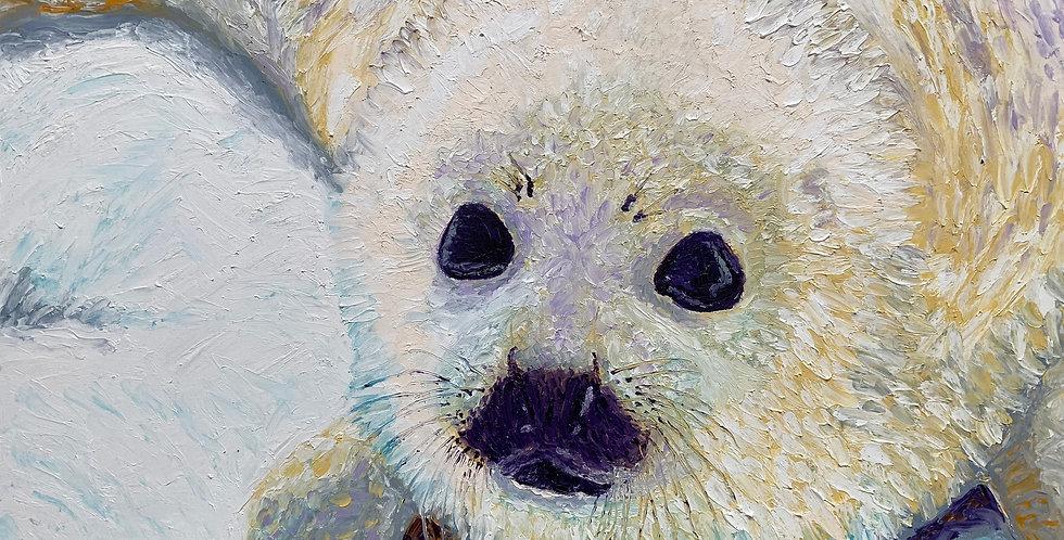 Harp Seal Pup Closeup