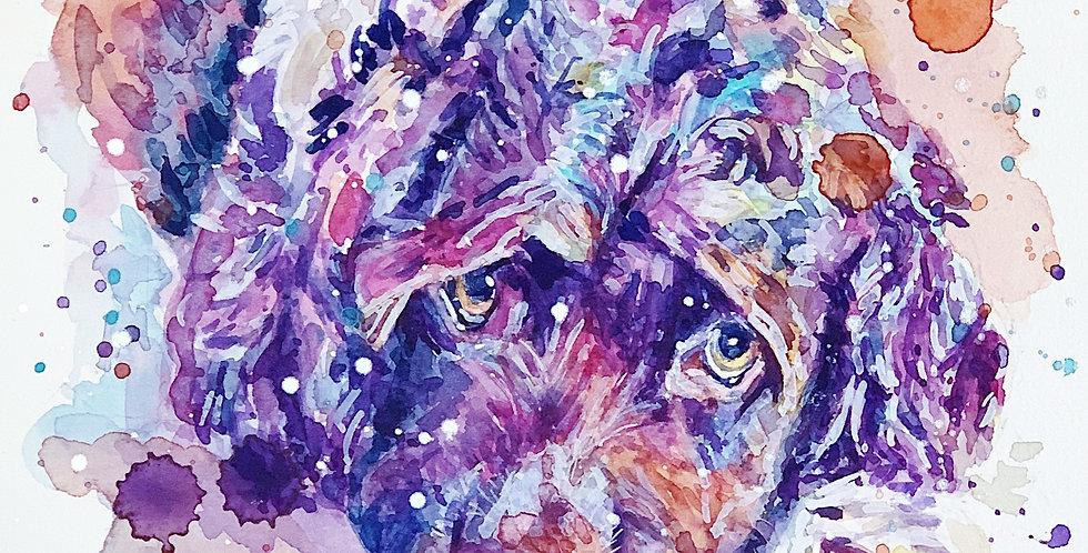 Cocker Spaniel Dog - Portrait of JJ