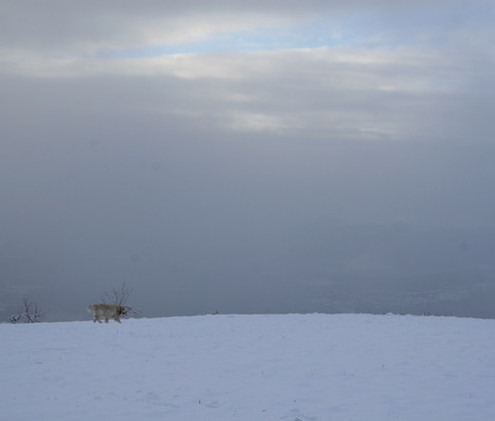 Neve a Cagliano 6