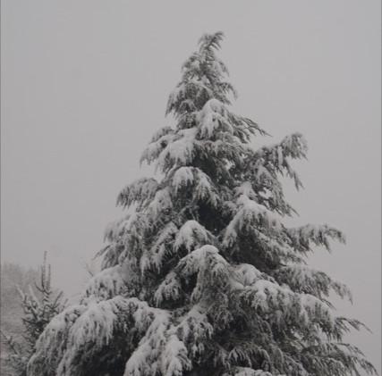 Neve a Cagliano 2
