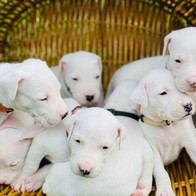 All the pups
