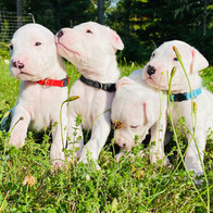 The Brothers - 3 Weeks Old