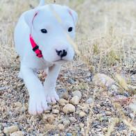 4 Week Old Rufio